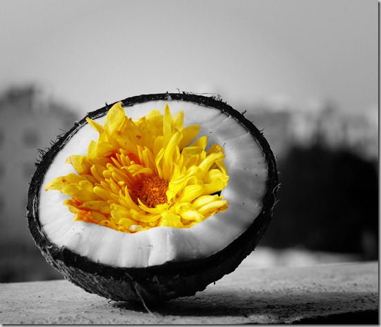 coconut-flower-inside